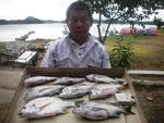 8月6日 ダゴチン釣りで宮村さん メイタ33㎝を頭に7匹 タイ1匹