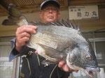 4月26日 吉光さん ガバチヌ53.5㎝