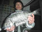 2月13日 磯釣りで段本さん 良型チヌ46.5㎝