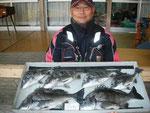 3月3日 磯から野田さん 良型チヌ45.5㎝を頭に6匹