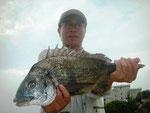 6月4日 磯釣りで岩本さん 良型チヌ45㎝