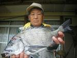 5月1日 ダゴチン釣りで吉田さん チヌ41㎝を頭に2匹