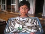 8月6日 サビキ釣りとキス釣りのリレー釣りで米刃田くん アジゴ14㎝前後を69匹 キス20㎝を頭に13匹