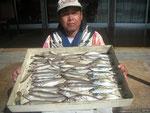 7月14日 ボート釣りで藤井さん キス24㎝を頭に52匹 アジ25㎝を頭に10匹