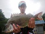7月1日 磯釣りで小倉さん キビレチヌ44.5㎝を頭に3匹 クロ24㎝前後2匹
