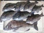 7月24日 ダゴチン釣りで鍬先さん メイタ33㎝前後6匹 アジ24㎝前後2匹