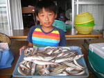 7月27日 ボート釣りで寺本親子 キス24㎝を頭に58匹