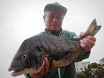 3月19日 磯から西田さん 良型チヌ49.2㎝を頭に2匹