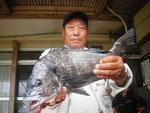 5月27日 磯釣りで高本さん 良型チヌ49.7㎝