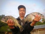 5月20日 磯釣りで松村さん チヌ43㎝・41㎝