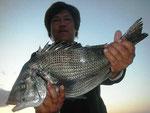 2月24日 磯釣りで北岡さん 良型チヌ49.4㎝