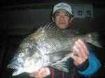 4月3日 磯釣りで飯塚さん 良型チヌ47.2㎝を頭に2匹