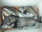 5月2日 ダゴチン釣りで杉本さん メイタ4匹