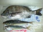 5月17日 磯釣りで後藤さん メイタ31㎝ アジ24㎝前後2匹