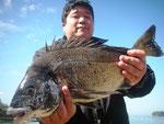 2月24日 磯釣りで伊東さん ガバチヌ50㎝・40㎝・38㎝