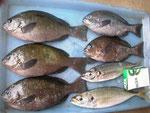 8月6日 磯釣りで北村さん クロ24㎝前後5匹 アジ27㎝を頭に2匹