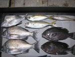 6月23日 ダゴチン釣りで木原さん メイタ35㎝~25㎝を3匹 クロ28㎝前後2匹 アジ23㎝前後2匹 キス1匹