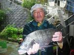 6月15日 ダゴチン釣りで北原さん 良型チヌ45㎝を頭に3匹 アジ7匹 クロ2匹