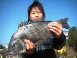 2月26日 磯釣りで北岡千尋くん チヌ40㎝