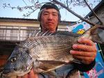 3月31日 磯から村上さん 良型チヌ 46.5㎝を頭に3匹