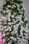 Дерево цветов 2