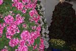 Дерево цветов 1