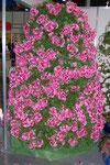 Дерево цветов
