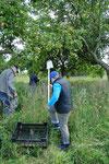 Äpfel sammeln in Fliegenberg (c) Dietrich Westphal