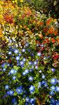 im Botanischen Garten von Akureyi