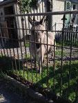 Und einen Esel besuchen wir auch.