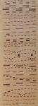 067 B Torelli Anna, Verticale (particolare), 1987 Italia carta pennarello   153,5x24 cm