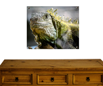 Reptilien + Amphibien Bilder
