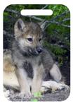Do I Dare? - Captive Animal, Montana