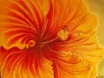 Hibiskus, ca. 30 x 40 cm