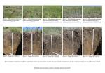 Почвы и растительность в районе работ