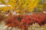 Herbstimpression / Høststemning