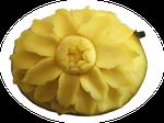 Blüte in Mango