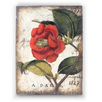 T-404 RED  CAMELIA  |  100 €