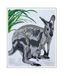 'Kangaroos are beautiful #1' Formaat (bxhxd): 50x60x2