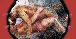 Sans titre n° 5  (rideaux regardant couple faisant l'amour) - huile sous verre - 78x143 cm - n° 6/2002 - série Caprices