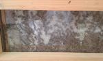 Hier kann man noch besser sehen, wie die Bienen arbeiten.