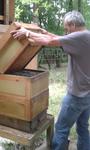 Herr Trapp öffnet vorsichtig einen Bienenstock...
