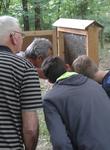 Franz Trapp zeigt uns einen Bienenschwarm in einem Schaukasten.