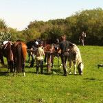 5 Pferde in der Radlertränke 7.9.2013