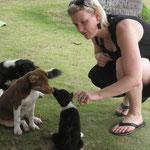 Babyhunde - leider nicht zum Mitnehmen