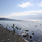 Treibholz Vancouver Island