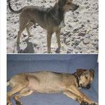 Fox Terrier-Mischling KOILE am 25.08.11 in 10178 Berlin-Mitte Alexanderplatz gestohlen