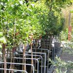 Windschutzsysteme für Tische, Bodenbeete und Baumschulen