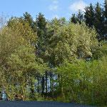 Die freie Auswahl... viel Gegend und Bäume..