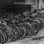 Oxford bikes. Fotografía en blanco y negro.  PVP. 40 €